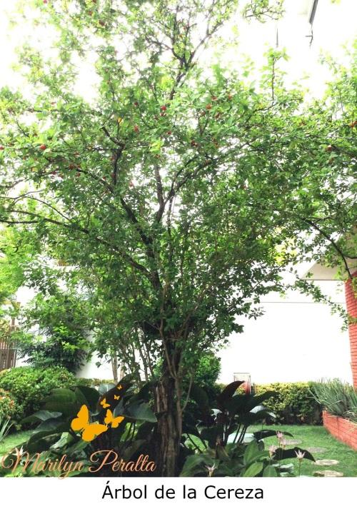 Árbol de la Cereza 1