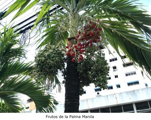Frutos de la Palma Manila