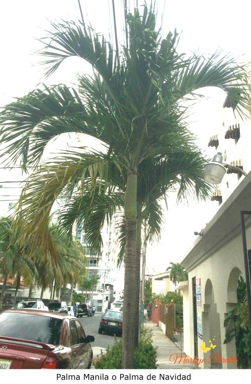Palma Manila