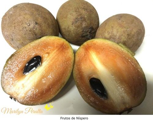 Frutos de Níspero