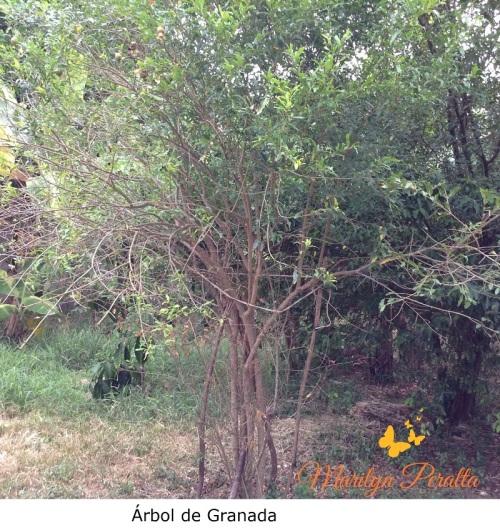 Árbol de Granada