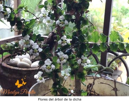 Flores del árbol de la dicha