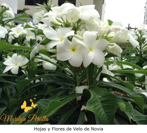Flores Velo de novia 1