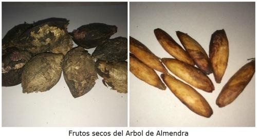 Frutos Secos de Almendra