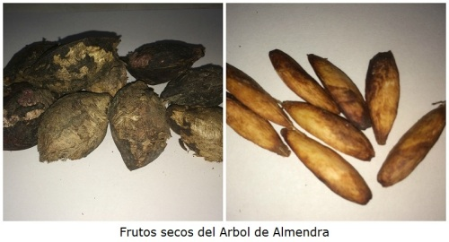 Frutos Secos de Almendra