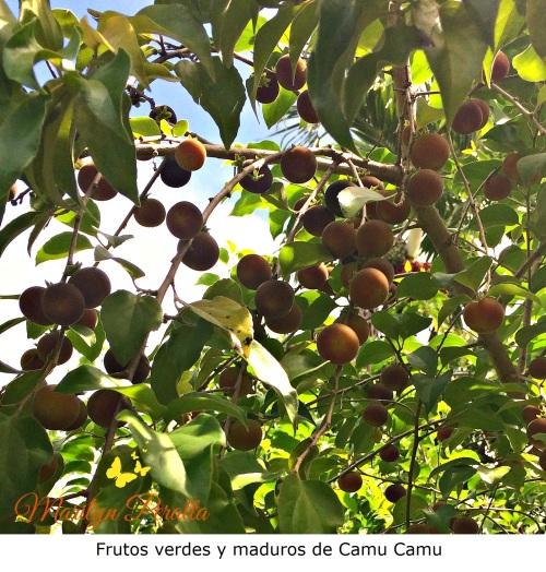 frutos-verdes-y-maduros-de-camu-camu