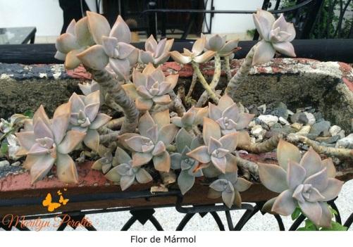 Flor de Mármol 1