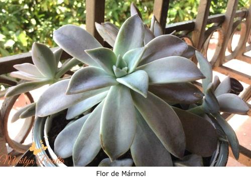 Flor de Mármol 2