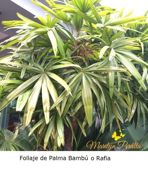 Follaje de Palma Bambu o Rafia
