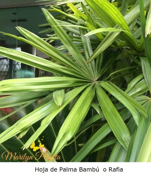 Hoja de Palma Bambu o Rafia