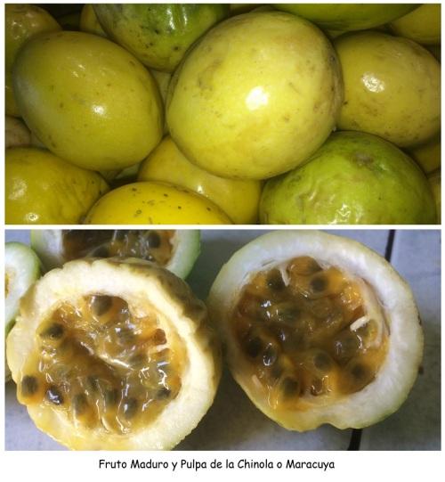Fruto Maduro y Pulpa de la Chinola o Maracuya