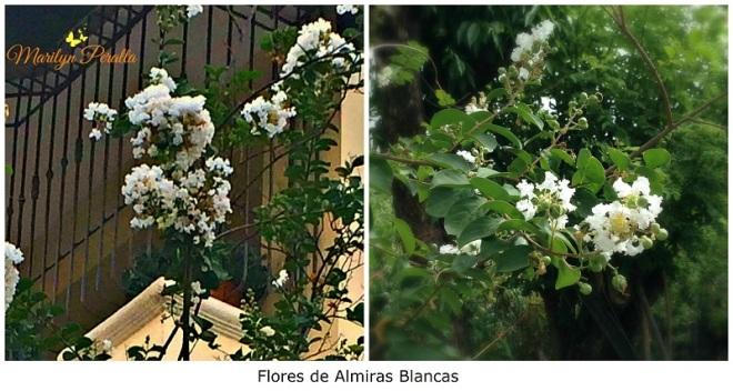 almiras-blancas-1