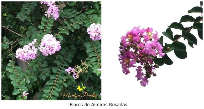 almiras-rosadas-1