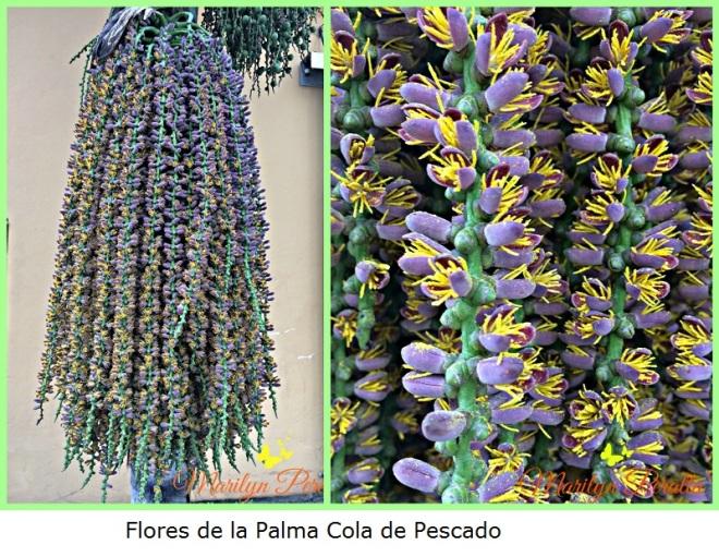 flores-de-la-palma-cola-de-pescado-a