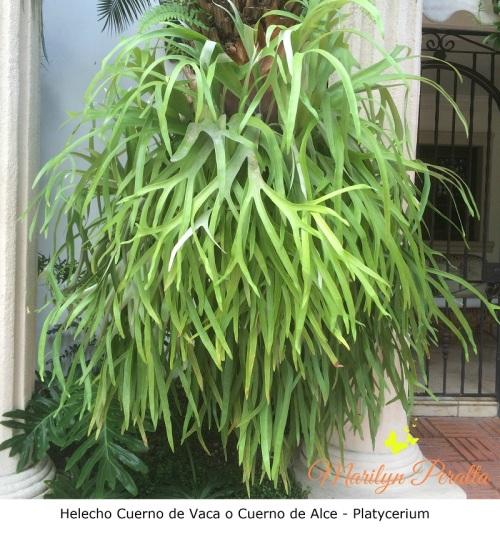 Helechos 193 rboles y flores en rep 250 blica dominicana