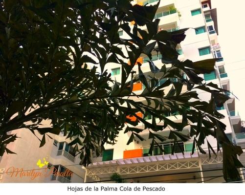 hojas-de-la-palma-cola-de-pescado