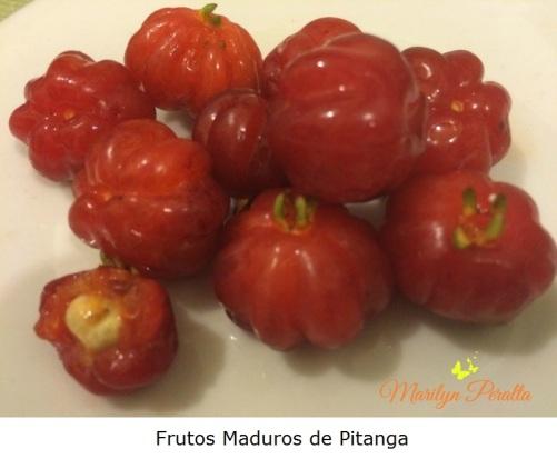 frutos-maduros-de-pitanga