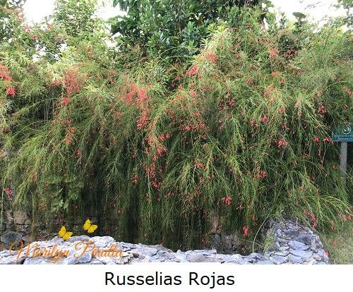 Russelias Rojas