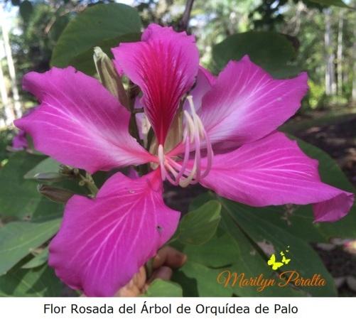 flor-del-arbol-de-orquidea-de-palo