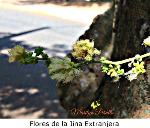 flores-de-la-jina-extranjera