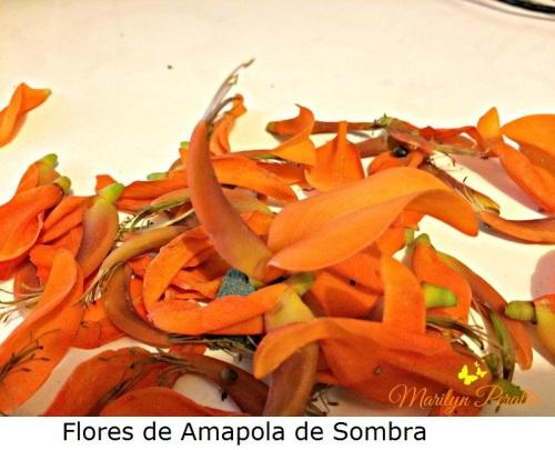 Flores de la Amapola de Sombra