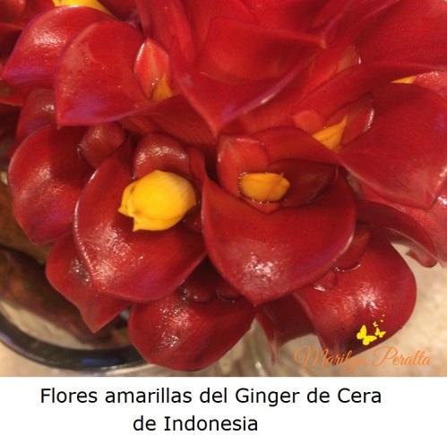 Flores amarillas del Ginger de Cera de Indonesia