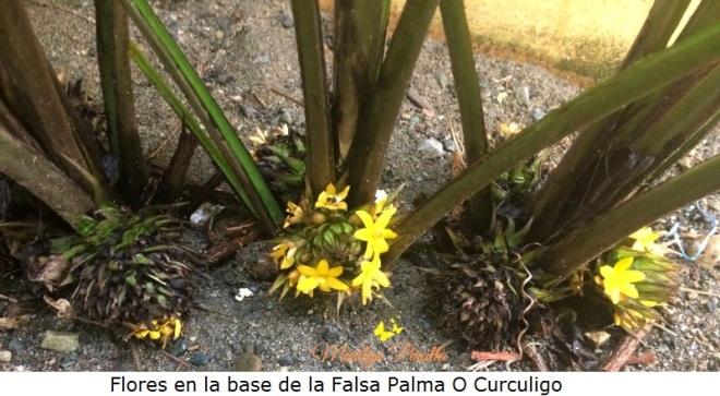 Flores en la base de la Falsa Palma