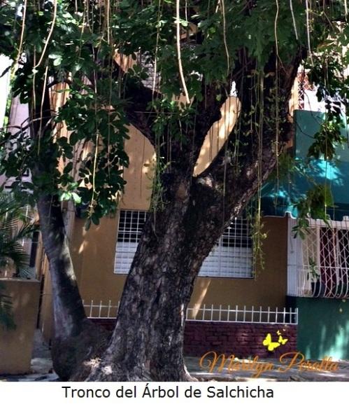Tronco del Árbol de Salchicha
