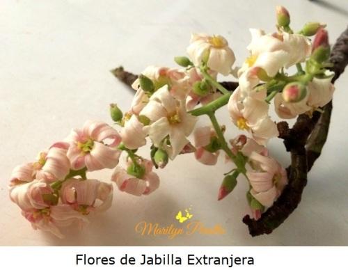 Flores de Jabilla Extranjera