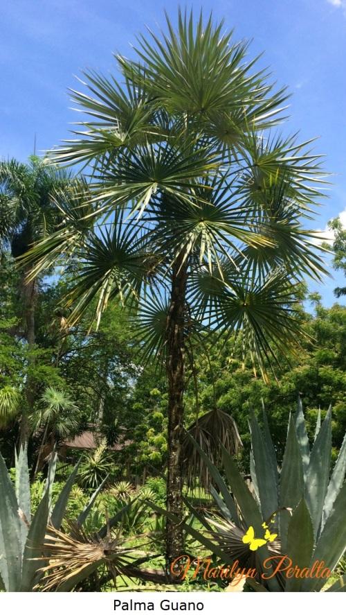 Palma Guano