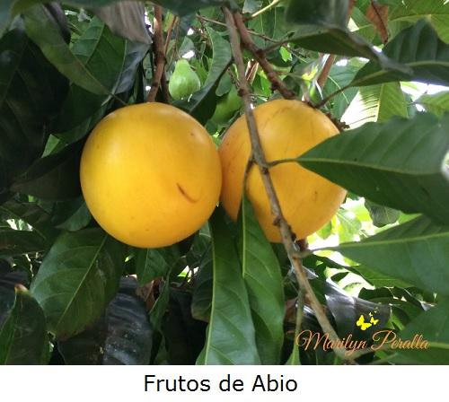 Frutos de abio