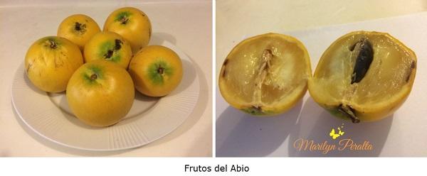 Frutos del Abio