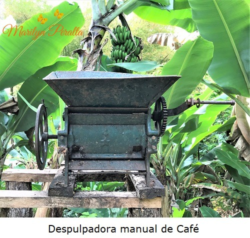 Despulpadora manual de cafe