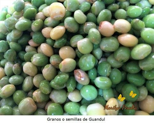 Semillas o granos de Guandul