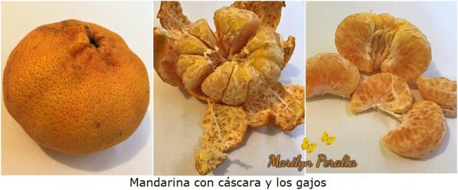 Mandarina y gajos
