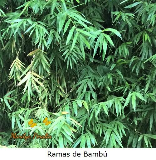 Ramas secundarias de Bambú.
