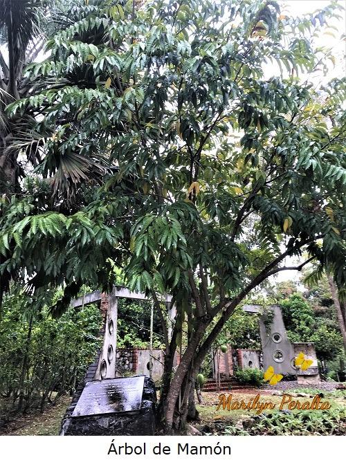 El Árbol de Mamón