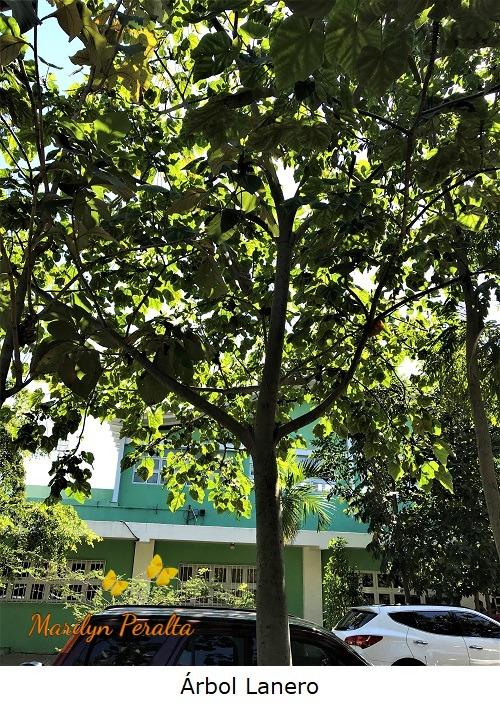 Árbol Lanero