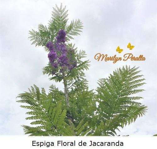 Espiga floral de Jacaranda