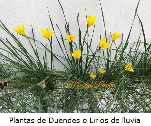 Plantas de Duendes