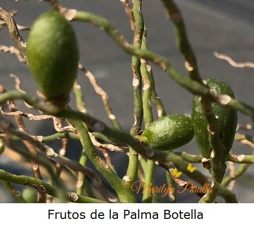 Frutos de la Palma Botella