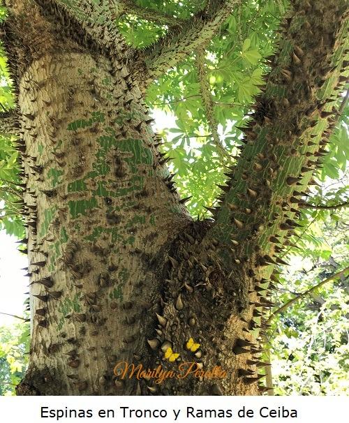 Espinas en tronco y ramas de Ceiba