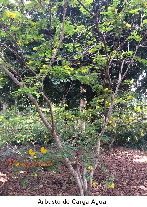 Arbusto de Carga Agua