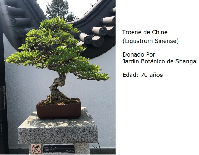 Bonsai No. 1