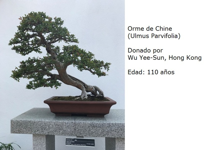 Bonsai No. 2