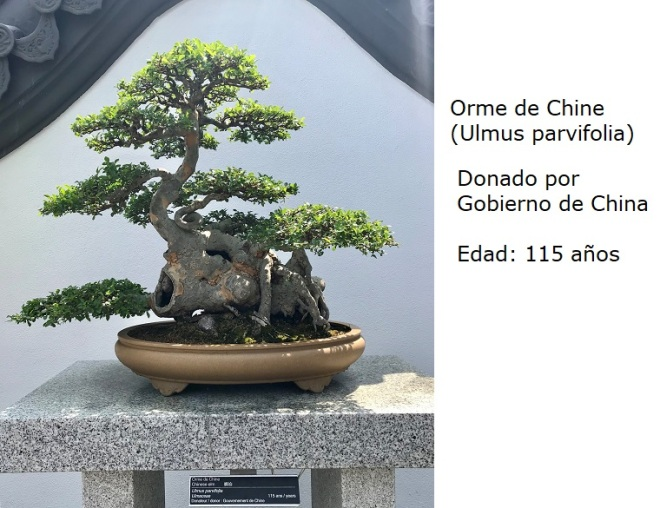 Bonsai No. 3