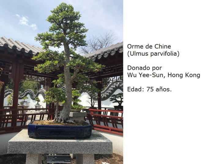Bonsai No. 5