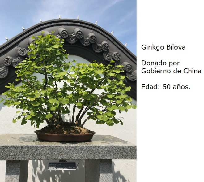 Bonsai No. 6