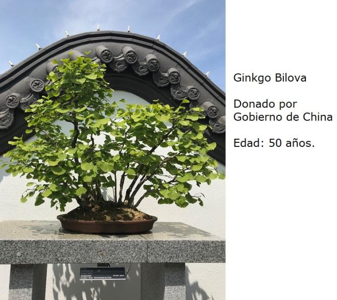 Bonsai No. 6