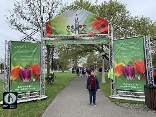 Festival de los Tulipanes 1